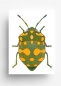 Mobile Preview: Postkarte Green Bug von jungwiealt